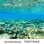 tranquil underwater scene with... | Shutterstock . vector #709979455