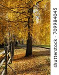 beautiful nature  trees in fall ... | Shutterstock . vector #709984045