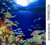 underwater coral reef landscape ... | Shutterstock . vector #709985134