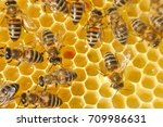 Bees On Honeycomb. Close Up Of...
