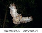 Stock photo tawny owl flying with common dormouse prey 709993564