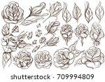 botanical graphics. roses. a... | Shutterstock .eps vector #709994809