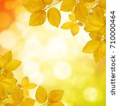 autumn leaves on the sun and... | Shutterstock . vector #710000464
