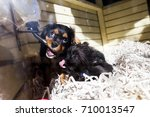 Stock photo cute puppies playing with the drinking fountain in a pet store s storefront window 710013547
