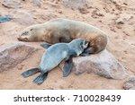 a cape fur seal pup ... | Shutterstock . vector #710028439
