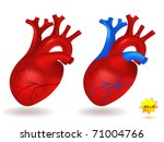 human heart model | Shutterstock .eps vector #71004766