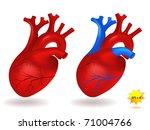 human heart model | Shutterstock .eps vector #71004766