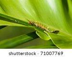 caterpillar   Shutterstock . vector #71007769