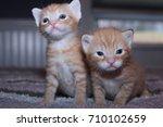 Stock photo cute little kittens 710102659