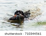black labrador retriever... | Shutterstock . vector #710344561