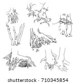 roots of different vector trees   Shutterstock .eps vector #710345854