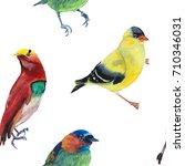 watercolor illustration of... | Shutterstock . vector #710346031