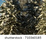 snow on pine trees | Shutterstock . vector #710360185