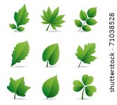 collection of green leaves...   Shutterstock .eps vector #71038528
