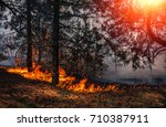 Fire. Wildfire  Burning Pine...