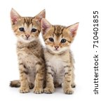 Stock photo two small kittens isolated on white background 710401855