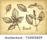 basil set. ink sketch on old...   Shutterstock .eps vector #710405839
