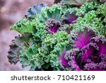 close up view of kale cabbage... | Shutterstock . vector #710421169