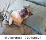 Cute Pug Dog Sleep On Pillow I...