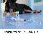vaccine rabies bottle and... | Shutterstock . vector #710502115