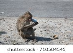 baby monkey after bath eat... | Shutterstock . vector #710504545