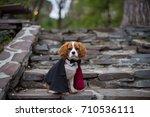 Cute puppy dracula