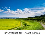 beautiful view of rice paddy...   Shutterstock . vector #710542411