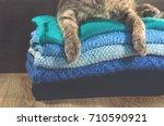 cute cat sleeps on a pile of... | Shutterstock . vector #710590921