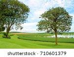 row of green tea plantation... | Shutterstock . vector #710601379
