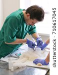 Small photo of The doctor and the assistant operate the cat on the operating table in the veterinary clinic