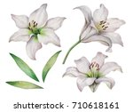 Watercolor Set Of White Lilies...