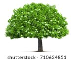 apple tree isolated 3d... | Shutterstock . vector #710624851