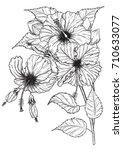 hibiscus flower vector by hand... | Shutterstock .eps vector #710633077