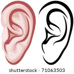 ear | Shutterstock .eps vector #71063503