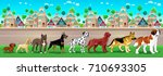 collection of purebred dogs... | Shutterstock .eps vector #710693305