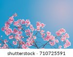 romantic cherry blossom flower... | Shutterstock . vector #710725591