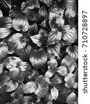 background of leaves in black... | Shutterstock . vector #710728897