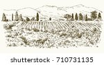 wide view of vineyard. vineyard ... | Shutterstock .eps vector #710731135