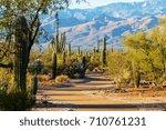saguaro national park | Shutterstock . vector #710761231