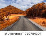 asphalt road  in the forest. | Shutterstock . vector #710784304