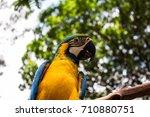 beautiful colorful birds   Shutterstock . vector #710880751