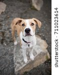 close up of young dog sitting... | Shutterstock . vector #711023614