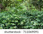 coffee plantation | Shutterstock . vector #711069091