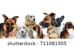 group of dogs on white... | Shutterstock . vector #711081505