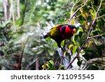 birds on the leaves   Shutterstock . vector #711095545