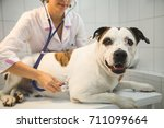 female veterinarian  with dog... | Shutterstock . vector #711099664