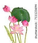 beautiful pink lotus flowers...   Shutterstock . vector #711123694