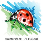 Vector illustration of a ladybug - stock vector