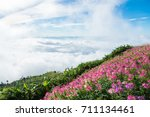 beautiful sea of fog at view... | Shutterstock . vector #711134461