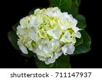 Beautiful White Flower Of...